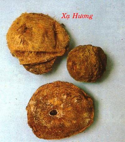 xa-huong